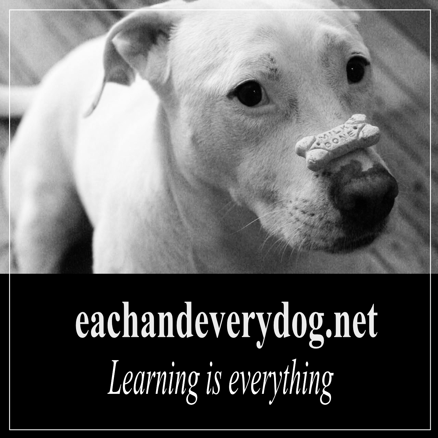 Each and every dog